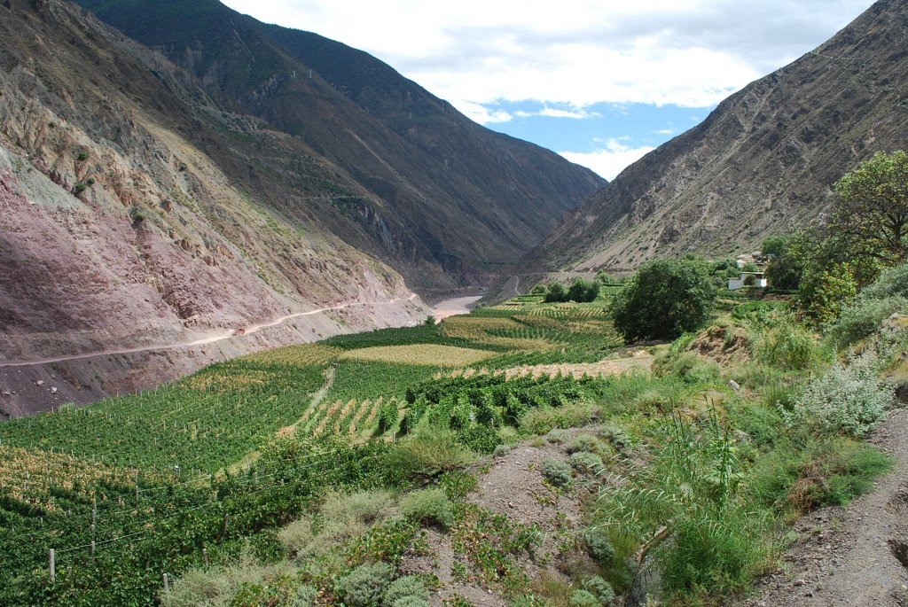 The government introduced Cabernet Sauvignon vineyards to the  village along the Upper Lancang in Yunnan close to Tibet.