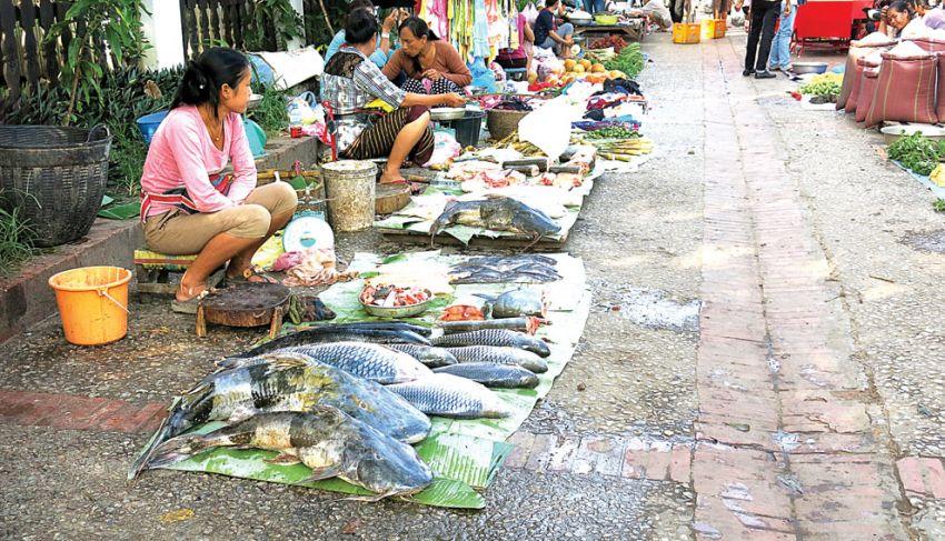 A fish trader waits for customers.