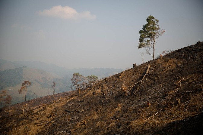 burmese logging