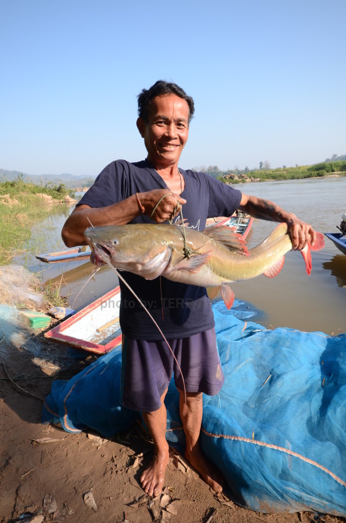 A Thai fisher with a fish caught from the Mekong River in Baan Muang, Nongkhai Province, February 2013. (Photo by TERRA.)