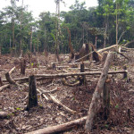 Kunming-based think tank fighting Myanmar forest loss